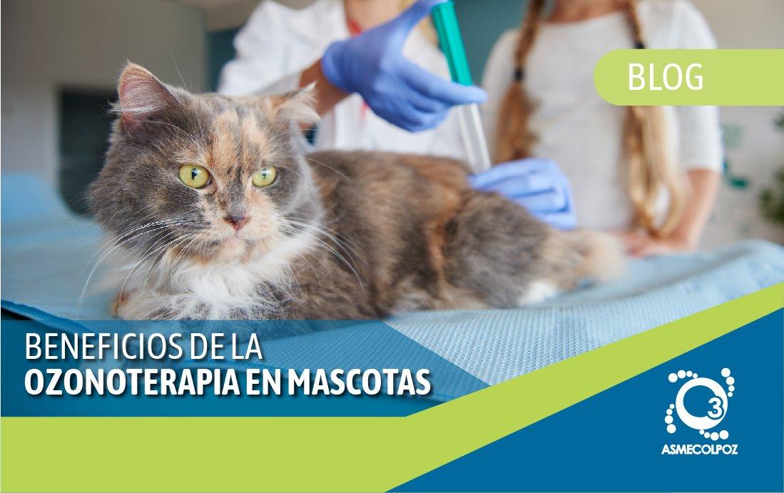 Beneficios de la Ozonoterapia en mascotas